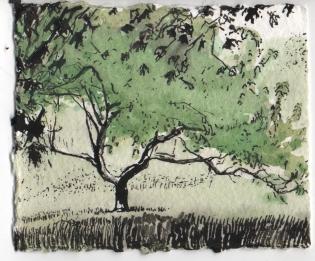 Wye Mills Tree