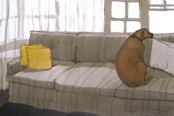 Dog lying on the sofa